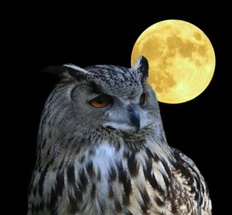 Losing Daylight: Fall Time Change is Easier for Owls than Larks